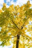 秋天可用的例证结构树向量 免版税库存照片