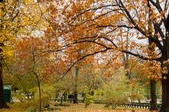 秋天可用的例证结构树向量 库存照片