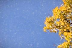 秋天可用的例证结构树向量 图库摄影