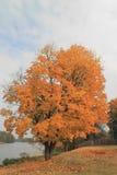 秋天可用的例证结构树向量 库存图片