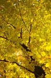 秋天可用的例证结构树向量 免版税图库摄影