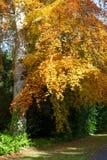 秋天可用的例证结构树向量 免版税库存图片