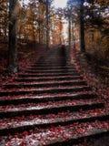 秋天台阶 库存照片