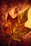 秋天叶子。 库存照片