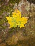 秋天叶子一 库存照片