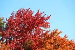 秋天叶子五颜六色的秋叶 图库摄影