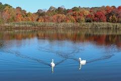 秋天叶子五颜六色的秋叶 免版税图库摄影