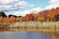 秋天叶子五颜六色的秋天场面 免版税图库摄影