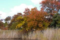 秋天叶子五颜六色的秋天场面 免版税库存照片
