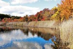 秋天叶子五颜六色的秋天场面 库存图片