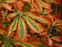 秋天叶子五颜六色的细节  库存照片