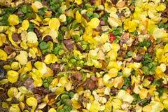 秋天叶子作为背景的 库存图片
