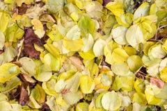 秋天叶子作为背景的 免版税库存照片