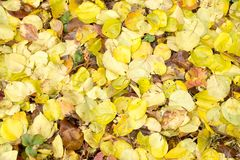 秋天叶子作为背景的 库存照片