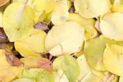 秋天叶子作为背景的 免版税图库摄影