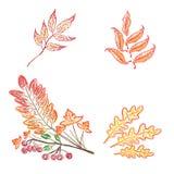 秋天叶子剪影,乱画,手图画,传染媒介例证 向量例证