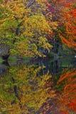 秋天叶子反映在湖 免版税库存图片