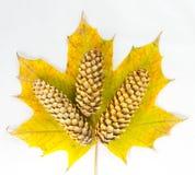秋天叶子和冷杉锥体的构成 库存图片