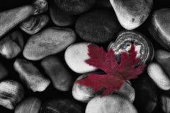 秋天叶子和岩石 库存照片