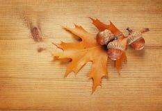 秋天叶子和橡子 库存图片