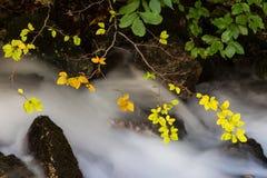 秋天叶子和流动的小河 库存照片