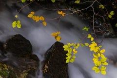 秋天叶子和流动的小河 免版税图库摄影