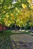 秋天叶子和结构树 免版税库存图片