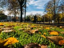 秋天叶子和街道背景 库存图片