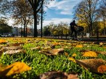 秋天叶子和街道背景 库存照片