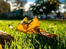 秋天叶子和街道背景 免版税库存照片