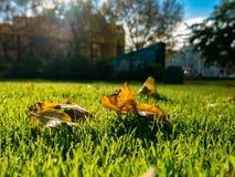秋天叶子和街道背景 免版税图库摄影