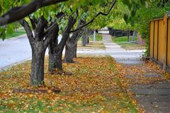 秋天叶子和边路 免版税库存图片