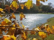 秋天叶子和闪耀的湖 库存照片