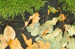 秋天叶子和青苔在木头 库存图片