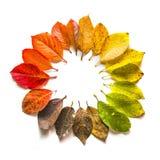 秋天叶子圆的梯度  秋天 库存照片