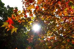 秋天叶子在一个晴天 免版税库存图片