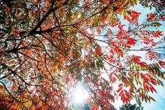 秋天叶子在一个晴天 免版税库存照片