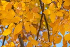 秋天叶子在一酥脆秋天天 免版税图库摄影