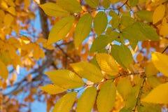 秋天叶子在一酥脆秋天天 库存照片