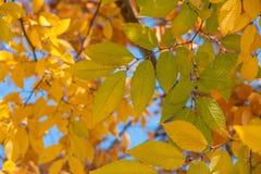 秋天叶子在一酥脆秋天天 免版税库存图片