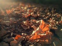 秋天叶子在不同的阳光下 免版税库存图片