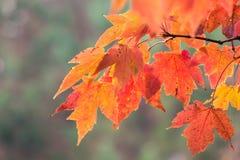 秋天叶子在乔治亚11月 免版税图库摄影