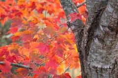 秋天叶子在乔治亚11月 免版税库存图片