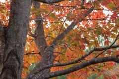 秋天叶子在乔治亚11月 库存图片