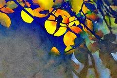 秋天叶子在优胜美地 免版税库存照片