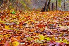 秋天叶子在佩特里奇的Belasitsa山落在12月 免版税库存照片