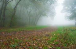 秋天叶子在有早晨薄雾的森林里 免版税图库摄影