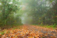 秋天叶子在有早晨薄雾的森林里 库存照片