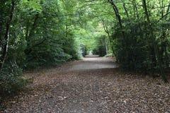 秋天叶子在森林北部伦敦里 免版税库存照片