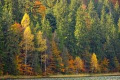 秋天叶子在湖圣安 免版税库存照片